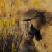 Affenwelten