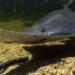 Bilder zur Sendung: Sägefische - Neptuns vergessene Kinder