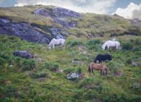Irlands Küsten