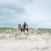 Bur und Bestla - 2 Kamele am Polarkreis