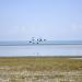 Seen auf dem Dach der Welt - Der Qinghai Hu in China