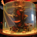 Die Aquarium-Profis: Reise nach Dubai