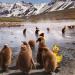 Tierbabys mit der Ente