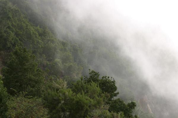 Bild 1 von 8: Die Magie und Vitalität des Lorbeerwalds von La Gomera speist sich aus dem Dunst und Nebel, der ihn häufig umhüllt. Nur der feuchte Passatwind sichert eine permanente Versorgung und damit das Überleben dieses grünen Paradieses.