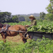 Kuba - Eine Insel im Wandel