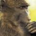 Das Waisenhaus für wilde Tiere - Abenteuer Afrika
