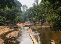 S.O.S. Amazonas