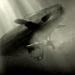 Der erste moderne Krieg - U-Boote