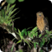 Bilder zur Sendung: Kinabatangan - Der Amazonas des Ostens