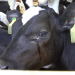 Geheimsache Tiertransporte
