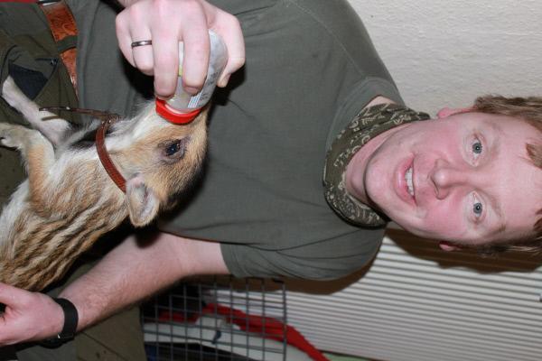 Bild 1 von 5: Wildschweinbaby Chantalle wird mit der Flasche aufgezogen.