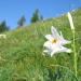 Karnische Alpen - Ein Gebirge voller Kostbarkeiten