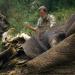 Der Verbündete der Höhlenelefanten
