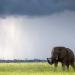 Tödliches Afrika - Tierisches Wettrüsten