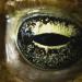Die Welt der Parasiten - Futter-Krieg