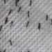 Mückenalarm - Invasion der Plagegeister