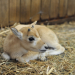 Bilder zur Sendung: Zoobabies