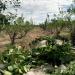 Kräuterwelten in Südamerika