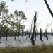 Bilder zur Sendung: Australiens Mississippi