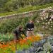 Magische Gärten - Schottland: Inverewe