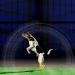 Bilder zur Sendung: Science of Stupid - Wissenschaft der Missgeschicke: Hunde-Special