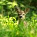 Bilder zur Sendung: Der wilde Wald der Kaiserin