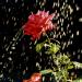 Bilder zur Sendung: Das Geheimnis der Gärten