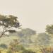 Wildes Uganda