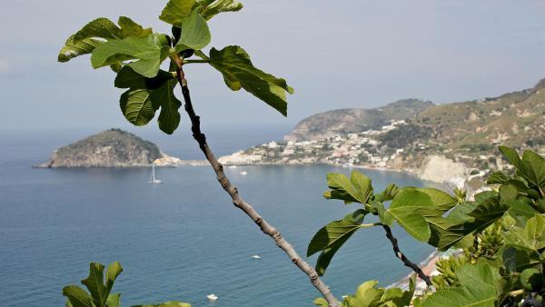 Bild 1 von 4: Wo die Kanzlerin baden geht - Ischias traumhafte Badebuchten.