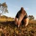 Die Tricks der Tiere - Geheimnisse des Graslands