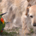 Die Tierärzte - Retter mit Herz