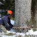 Bilder zur Sendung: Big Bad Wood - Profis an der Kettens�ge