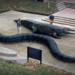 Bilder zur Sendung: Mega Croc vs. Superschlange
