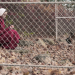 The Handmaid's Tale - Der Report der Magd