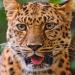 Bilder zur Sendung: Animals Gone Wild