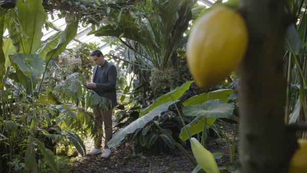 Bild 1 von 13: Goldtüpfelfarn statt Sonnencreme: An der Uni Mainz erforscht der Molekularbiologe Patrick Schmitt den Bio-Sonnenschutz der Maya.