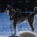 Bilder zur Sendung: Life Below Zero - Überleben in Alaska