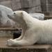 Der Zoo: Tiergefängnis oder Artenschutz? - Unterwegs im Westen