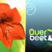 Bilder zur Sendung: Querbeet
