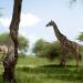Heimat Tansania - Unter dem Kilimandscharo
