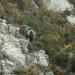 Im Reich der Bergbären