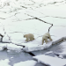 Expedition Arktis - Was macht ein Wettermann im Eis?