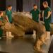 T-Rex: Autopsie eines Killers