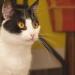 Bilder zur Sendung: 15 Dinge, die Sie über Katzen wissen müssen