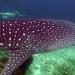 Bilder zur Sendung: Die Malediven und der Walhai