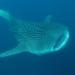 Bilder zur Sendung: Die Schn�ffelhaie