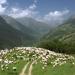 Gipfel der Genüsse: Sambuco, im Valle Stura in Italien