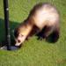 Bilder zur Sendung: Safari auf dem Golfplatz