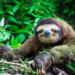 Bilder zur Sendung: Retter der Wildnis
