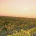 Weinviertel - Weites Land